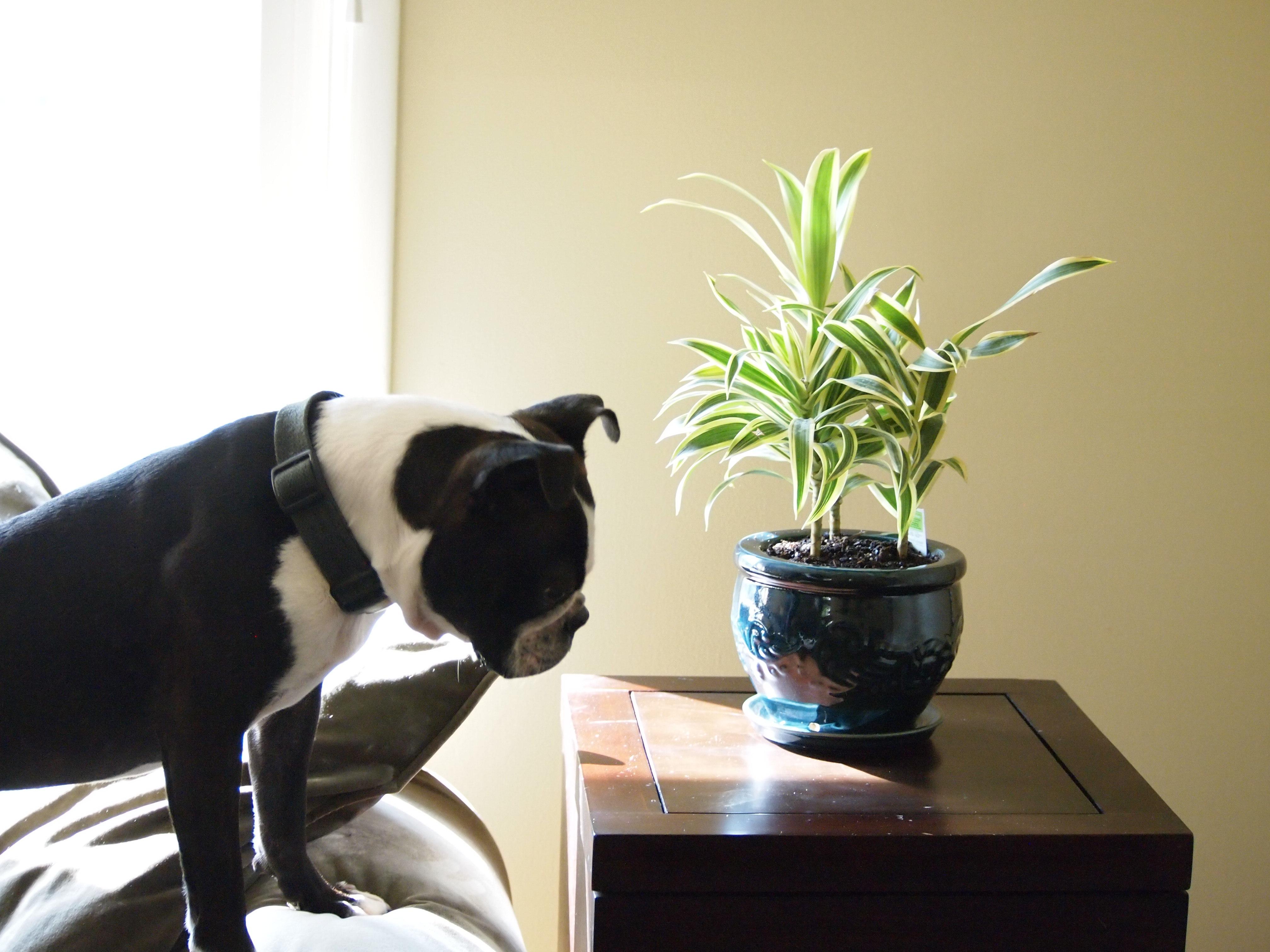 Evcil hayvanlara alerjisi olanlara güzel haber